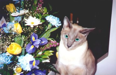 Ammie, seconds before chewing up these flowers